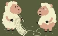"""解密P2P网贷""""羊毛客"""":成群结队薅羊毛,集团作战畸形壮大"""